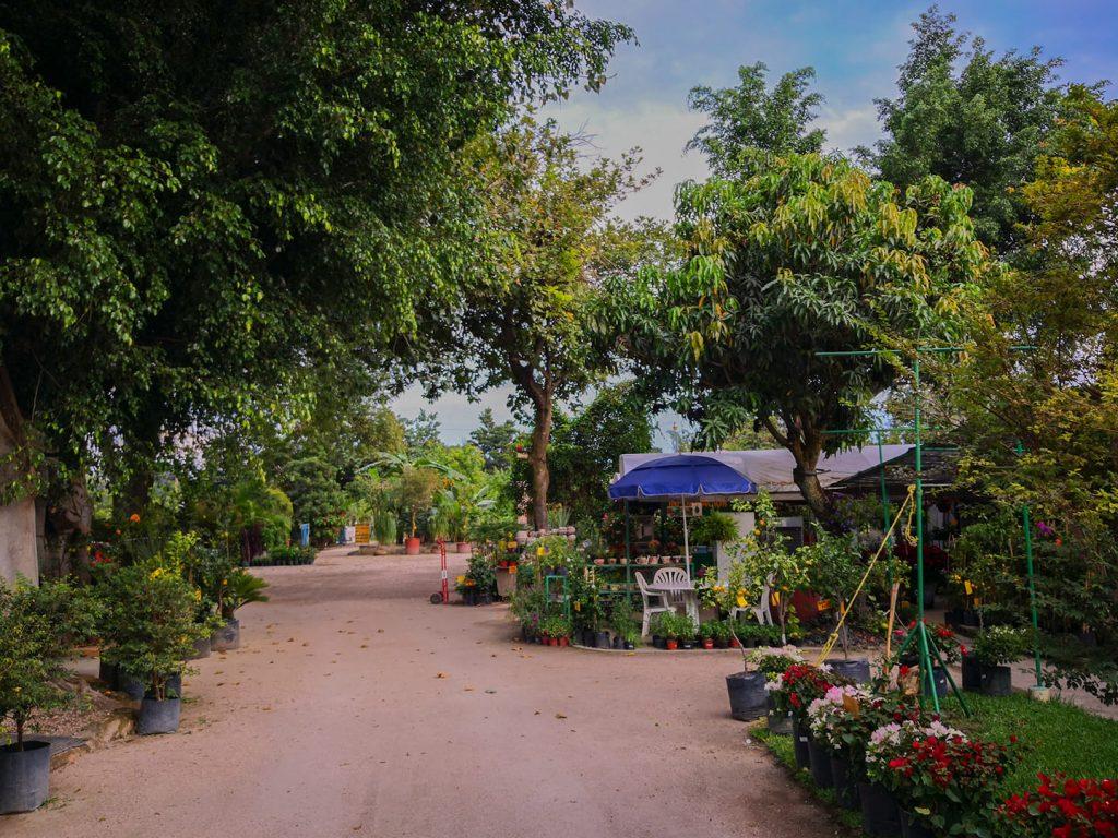 Vivero en Yautepec de árboles frutales